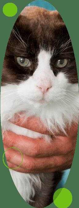 produits vétérinaires à canteleu pharmacie portail